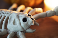 293/366 - Monster (Esko) Tags: 2016 october 366 365 366project 366challenge 365project 365challenge spooky decoration halloween candlelit