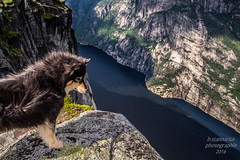Nala am Berg (b.stanni) Tags: nala berge berg wasser water wandern rock tier tiere outdoor animals animal sommer summer fjord fels hund dog lysefjord landschaft landscape natur mountains mount nature norge norwegen norway m