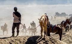 Sea of Sand (Quentin K) Tags: indonesia travel mountain volcano bromo horse tengger sand trek java