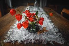 Chinese lantern (Chrisnaton) Tags: flowers wooden tablevasetable decorationtable runnerstilllifelampionblumephysalisbladder cherrychinese lantern