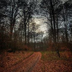 INSTAGRAM 365 Day 337: Tracks (tomas_nilsson) Tags: instagram365 sweden torup svedala forest woods fallenleaves fallcolors tiretracks road mutedcolors cloudyday cloudy quietmoment calm cellphonephotography lg g4 snapseed postprocessing