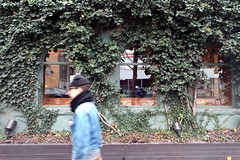 walk (Ian Muttoo) Tags: img20161129101738edit ontario canada gimp toronto