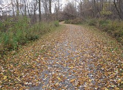 IMG_1064 (Sally Knox Sakshaug) Tags: november 2016 fall autumn outdoors outside daytime day nature color bright leaf leaves ground foreground mid photo background colorful colors orange yellow brown path pathway walkway trail lined distance green weed weeds grey tree trees trunk trunks branches bare dirt sky white landscape