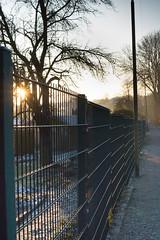 341/2016 Winter morning (puste66blume) Tags: 3662016 alpha58 hff inesbilder winter zaun fence puste66blume sunrise
