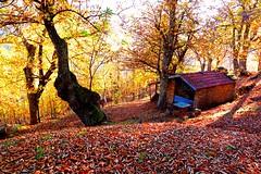 baita... (sicca85) Tags: canon siccardimassimo autunno autumn allaperto cuneo garessio tramonto alberi albero foglie colori colore italia italy montagna world mondo baita ngc