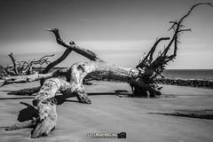 Driftwood Beach (The Suss-Man (Mike)) Tags: atlanticocean beach driftwoodbeach georgia glynncounty jekyllisland ocean sand sonyslta77 sussmanimaging thesussman trees water unitedstates he
