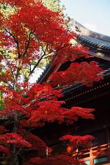 Rinnoji Temple, Nikko (Hall1998) Tags: japan nikko canon eos 5dmarkii ef24105mmf4isii