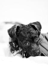 Family 👪 (Katelyn Liu) Tags: cutie candid daring sneaky eyes dog puppy maltipoo