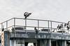 _DSC3137 (marilynwe) Tags: 2016 edmonds washington ferrylanding kingston sunrise water ferry