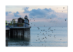 They're back! (hehaden) Tags: birds starlings murmuration sea sky clouds sunset pier brightonpier palacepier helterskelter brighton sussex