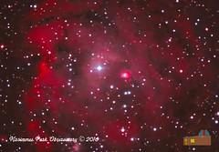 Monkeyhead Nebula (Procyon Systems) Tags: monkeyheadnebula ngc2174 orion astrophoto kpo