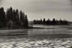 Astotin Lake (Joseph Austin) Tags: elkislandnationalpark astotinlake alberta winter cold lake freezing freezingcold nationalpark nature ice bw monochrome blackwhite frozenlake water coldwater snow openwater