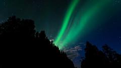 Aurora (JH') Tags: nikon nikond5300 nature d5300 wideangel exposure trees tree auroraborealis aurora borealis sky sigma sweden summer forest heaven highcoast landscape longexposure clouds colors green stars