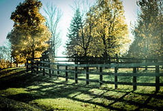 5 o'clock shadow (HFF) (13skies) Tags: happyfencefriday fence lateday sun lowsun shadows trees greengrass fallcolours fallcolors autumn fall season hff