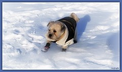 MinusTwentyEight (LavenderMillie) Tags: cold dog animal temperature alberta outdoor snow winter