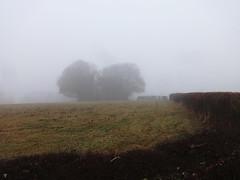 Foggy Bottom (ART NAHPRO) Tags: fog mist trees copse sussex rural farm december