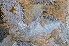 Still Life by Jack Frost (edmason88) Tags: icecrystals stilllife jackfrost cold glass tamron90mmvcmacro strathconacounty alberta