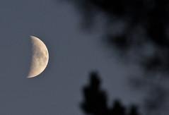 Moonlight (jussitoivanen) Tags: nature naturephoto naturephotographer finnishnature naturphoto naturfotografie suomi finland suomenlinna