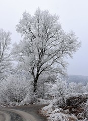 (:Linda:) Tags: germany thuringia village bürden hoarfrost tree path