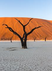 20130615_Namibia_Sossusvlai_0048.jpg (Bill Popik) Tags: africa sanddune namibia 2places sossusvlai