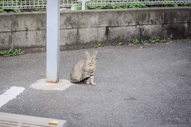 Today's Cat@2013-08-08