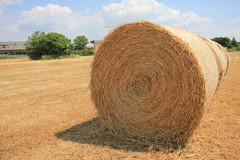 Miracles and bales (ZenZer0Zer0) Tags: harvest pisa piazza hay dei miracoli fieno mietitura barbaricina fienagione