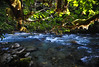 A Place of Salmon (Fish as art) Tags: nature landscape nikon britishcolumbia rivers paysage pacificcoast bellacoola naturfotos natuurfotografie outdoorphotography paulvecseiphotography paysagesnordiques