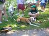 08-26-2012HornPond017
