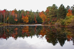 Mill pond at Olmstedville (roytsaplinjr) Tags: reflections adirondacks autumncolors essexcountyny