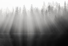 of the shadows thrown (Super G) Tags: california trees blackandwhite bw lake reflection forest sunrise smoke rays rimfire pollockpines