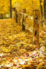 Autumn Forest Floor (J. Myers) Tags: park justin autumn light sunset ohio tree fall nature beautiful america creek forest canon season landscape photography evening midwest scenery state magic scenic caesar foliage explore american hour 1740mm myers f4l 550d t2i