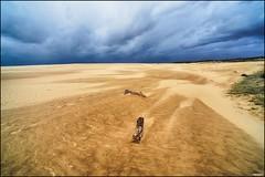 Hoge Veluwe; Just before the storm (Fred van Daalen) Tags: arnhem thenetherlands otterlo gelderland hogeveluwe schaarsbergen hoenderlo