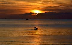 Brown (Stphane Calvet) Tags: voyage trip travel color colors thailand nikon asia asie ni thailande stphanecalvet stephanecalvet d800e stphanecalvetnikon