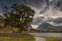 Buttermere Ash (yadrad) Tags: tree lakes ashtree ash buttermere thelakedistrict cumbia fleetwithpike lakebuttermere