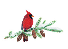 Cardinal (gloriously shambolic) Tags: bird art pinetree watercolor painting cardinal watercolour pinecone birdart snowybranches birdsinwinter