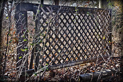 On the Fence Line (Photographybyjw) Tags: wood old trees fall rural fence weeds border north property dry line foliage worn carolina weathered posts lattice on photographybyjw