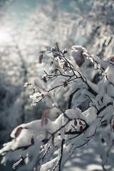 Pic de l'Escalette (dataichi) Tags: winter snow france mountains forest montagne hiver neige midi garonne haute pyrennées