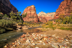 Angel's Landing from The Virgin River_1235 (chasingthelight10) Tags: travel mountains nature sunrise photography landscapes utah events places rivers angelslanding vistas sunrises zionnationalpark canyons virginriver thegrotto westwall riparianhabitat otherkeywords