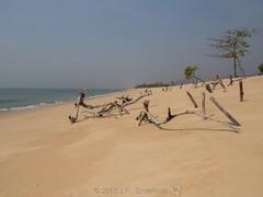Sculptures (Makgobokgobo) Tags: africa beach landscape sussex sierraleone peninsula francos sussexbeach westernarea