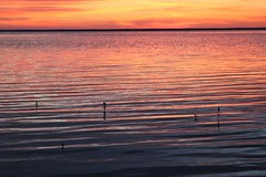 pink shine (ailie*) Tags: ocean pink blue sunset red sky orange plants nature water birds night clouds reflections landscape evening florida cloudy horizon silhouettes sandbar peaceful calm ripples ailie