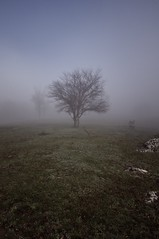 Catharsis (oskaybatur) Tags: world morning blue tree misty turkey october pentax infinity sunday türkiye foggy bluesky türkei minimalism aristotle bolu kramp aristoteles katharsis 2013 sigma1770 justpentax pentaxart pentaxkr sigma1770f284dcmacrooshsm tokadihayrettin κάθαρση