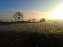 frosty field (yoshaza) Tags: trees winter brown cold green field season ground frosty icy flickrandroidapp:filter=none
