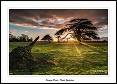 The Parks, Scruton (barnowls07) Tags: trees sunset field nikon yorkshire stump northyorkshire parkland scruton lebanoncedars neilbarkerphotography