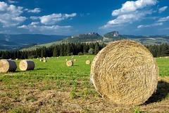 Silage in the meadow (Myslitel) Tags: summer mountain mountains green nature field grass rural landscape countryside scenery farm country hill farming rustic harvest grow scenic meadow straw dry farmland round land roll slovakia feed farmer hay parcel agriculture bale bound horizont agricultural slovak harvested