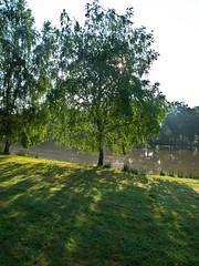Morgensonne / Morning sun (schreibtnix) Tags: park trees travelling nature backlight morninglight pond reisen frankreich europa europe natur teich bume gegenlicht morgenlicht olympuse5 lafertstaubin schreibtnix
