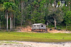 Amazonian landscape (L▲iv ©) Tags: life house smile brasil casa amazon manaus brasile foresta 2014 amazzonia riodelleamazzoni laivphoto amazzonica brasil2014