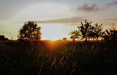 Sunset 4 (Sabrina Steiger) Tags: sunset sky field sunrise germany landscape deutschland lights licht sonnenuntergang natur feld himmel landschaft sonne abendsonne