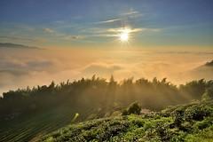 ~~ Tea farm Sunset (Shang-fu Dai) Tags:  taiwan   clouds nikon d800e sky     landscape formosa sunset  af20mmf28d