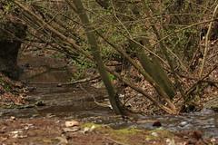 Mtraverebly-Szentkt Nemzeti Kegyhely (bencze82) Tags: canon eos 700d magyarorszg hungary mtra mtravereblyszentkt nemzeti kegyhely erd forest wood woods termszet nature spring tavasz voigtlnder apolanthar 90mm f35 slii