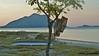 Evening at Alor Kecil NTT (Sekitar) Tags: alor ntt nusatenggaratimur kleinesundainseln lessersundaislands sundainseln indonesia pulau sunset kepa kecil pemandangan earthasia